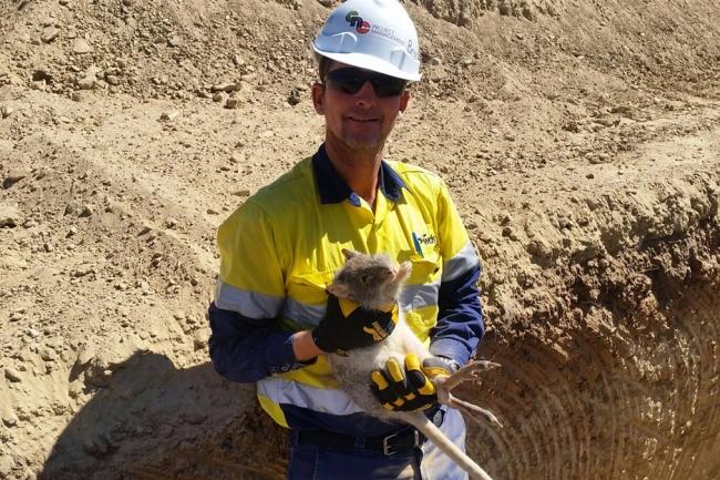 Cobbora Coal Project, Cobbora Holding Company Pty Ltd